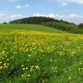 Frühling im Erzgebirge (Foto: DECKERWEB)